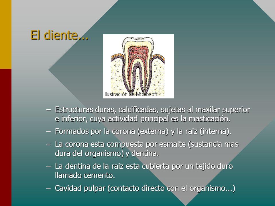 El diente... Estructuras duras, calcificadas, sujetas al maxilar superior e inferior, cuya actividad principal es la masticación.