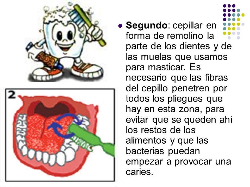 Segundo: cepillar en forma de remolino la parte de los dientes y de las muelas que usamos para masticar.