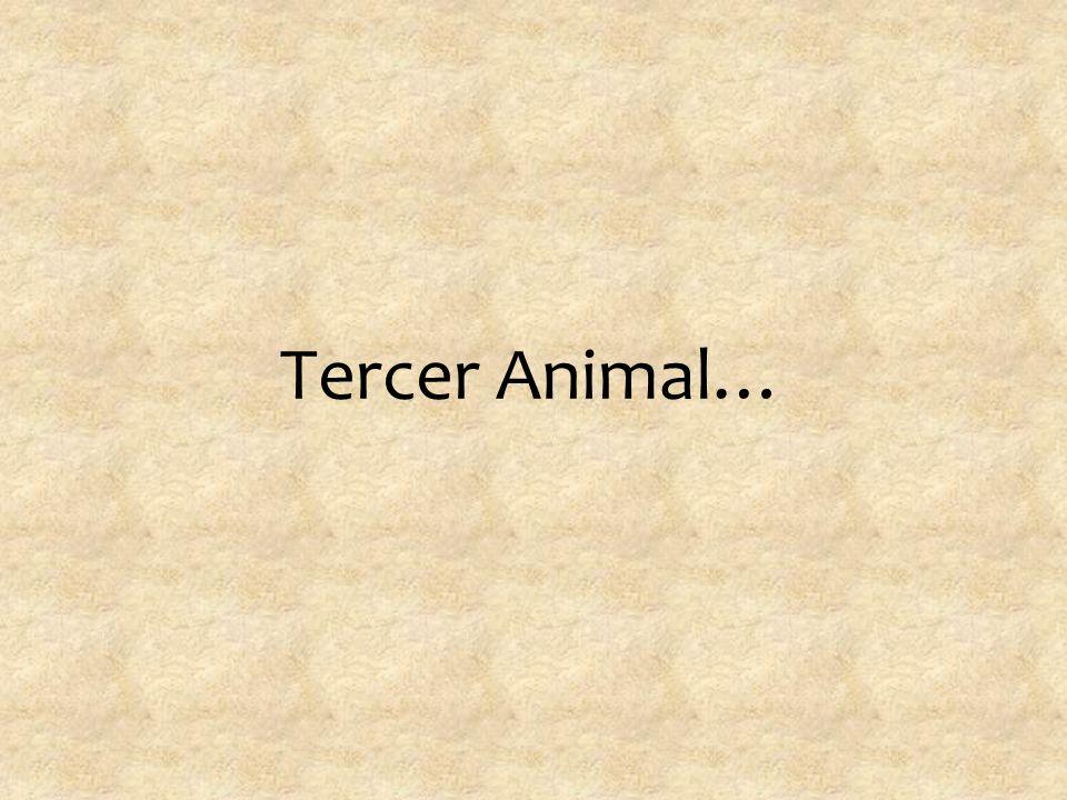 Tercer Animal…