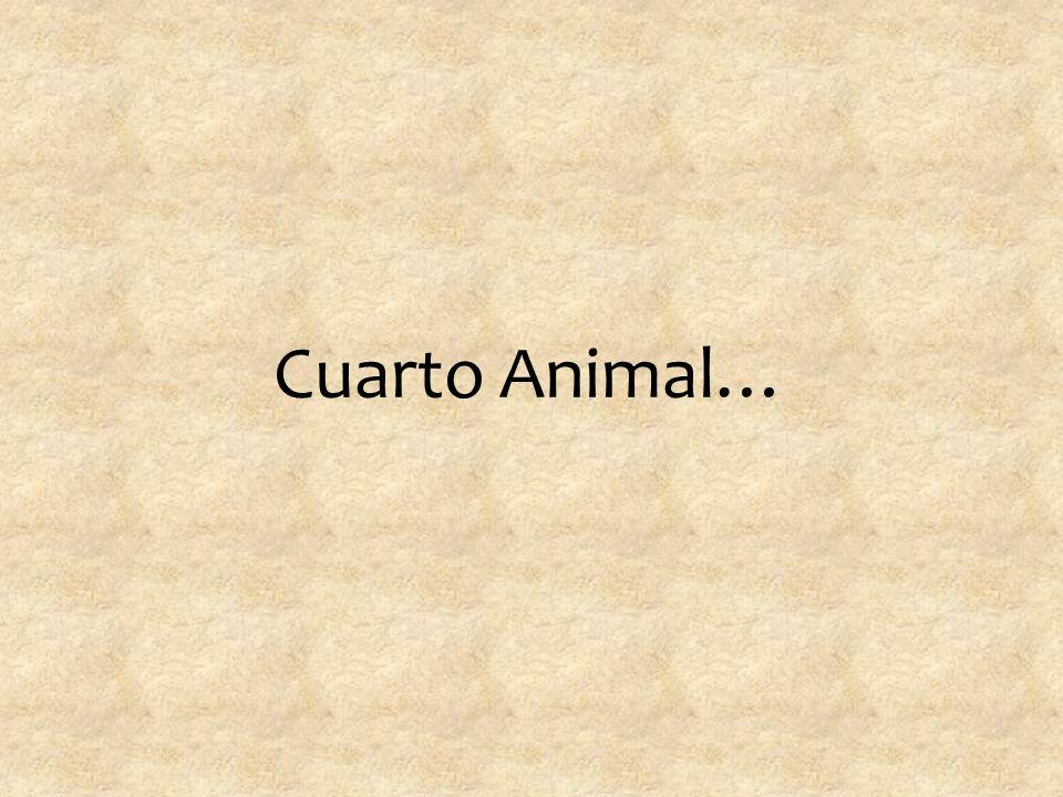Cuarto Animal…