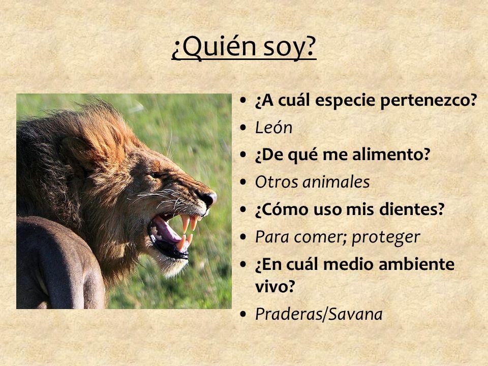 ¿Quién soy ¿A cuál especie pertenezco León ¿De qué me alimento