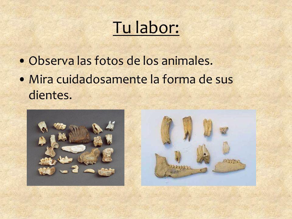 Tu labor: Observa las fotos de los animales.