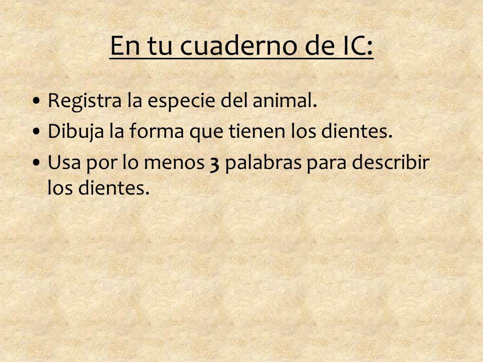 En tu cuaderno de IC: Registra la especie del animal.