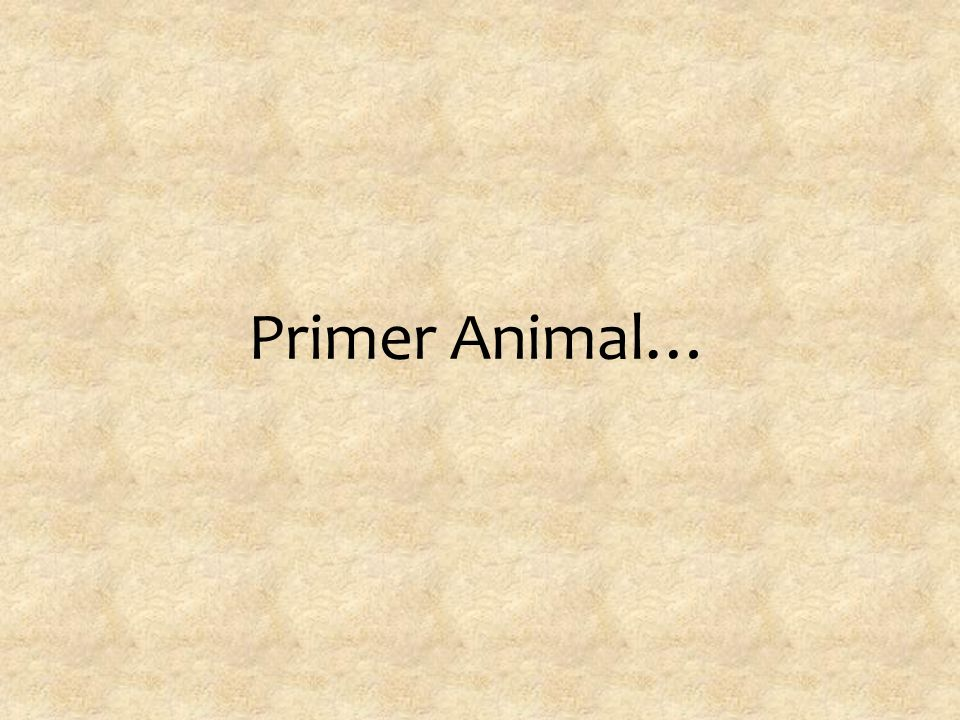 Primer Animal…
