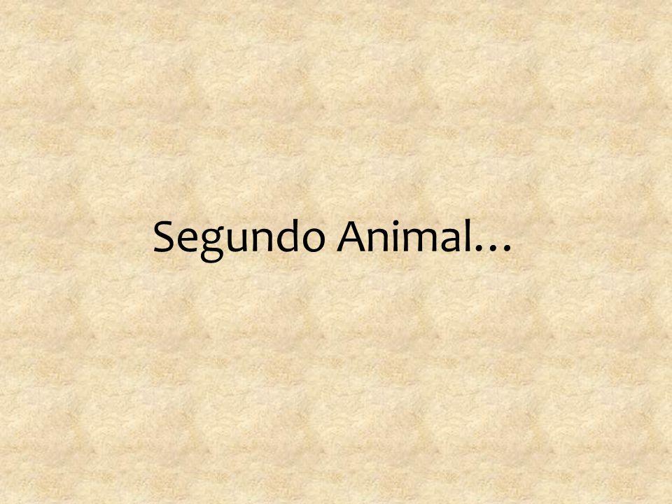 Segundo Animal…