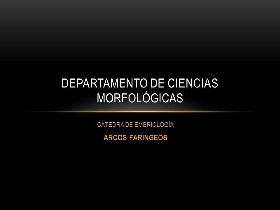 DEPARTAMENTO DE CIENCIAS MORFOLÓGICAS
