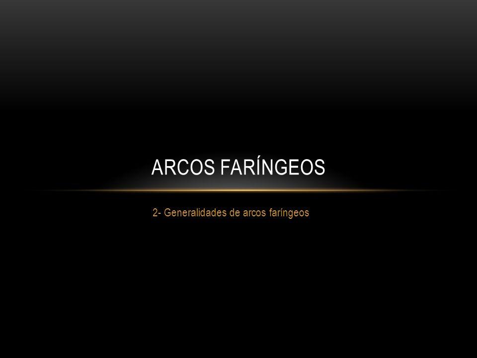 2- Generalidades de arcos faríngeos