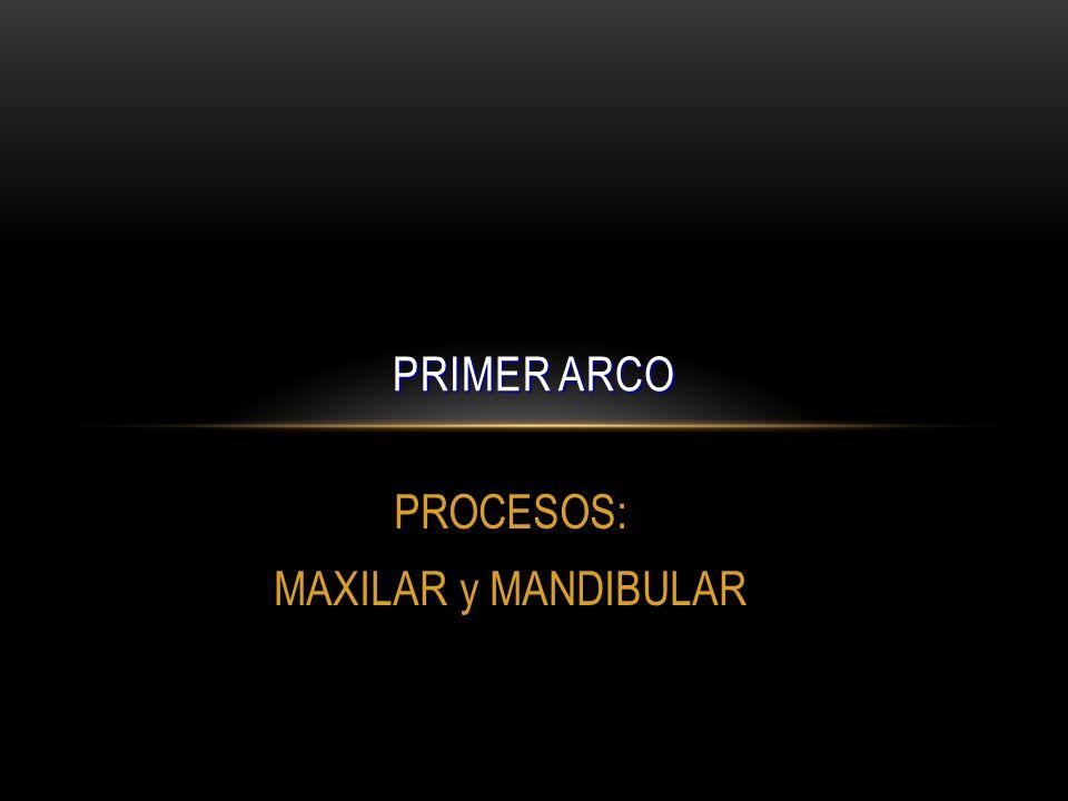PROCESOS: MAXILAR y MANDIBULAR