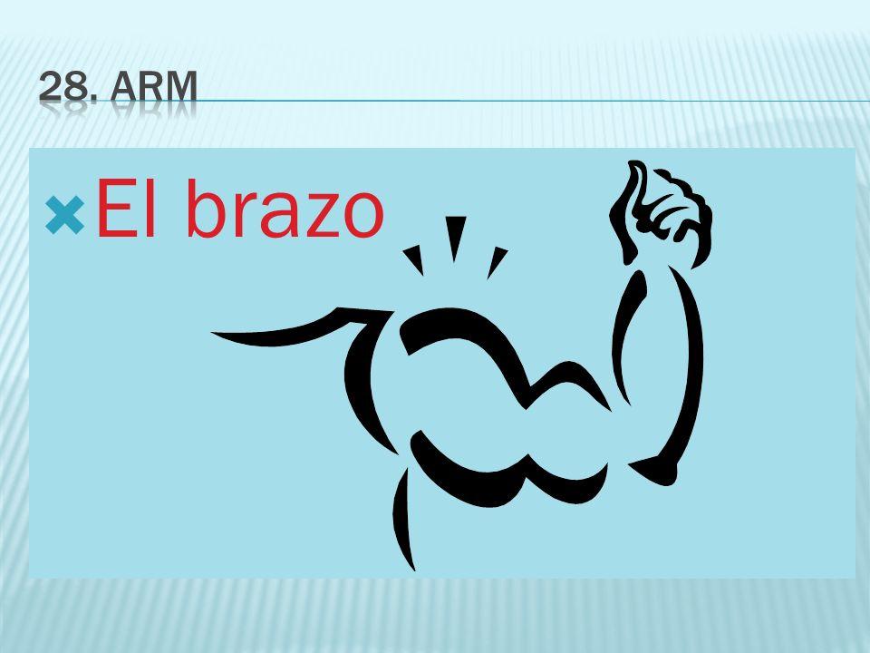 28. ARM El brazo