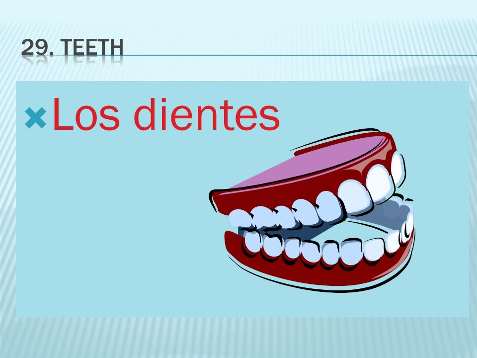 29. Teeth Los dientes