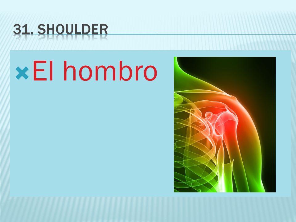 31. shoulder El hombro