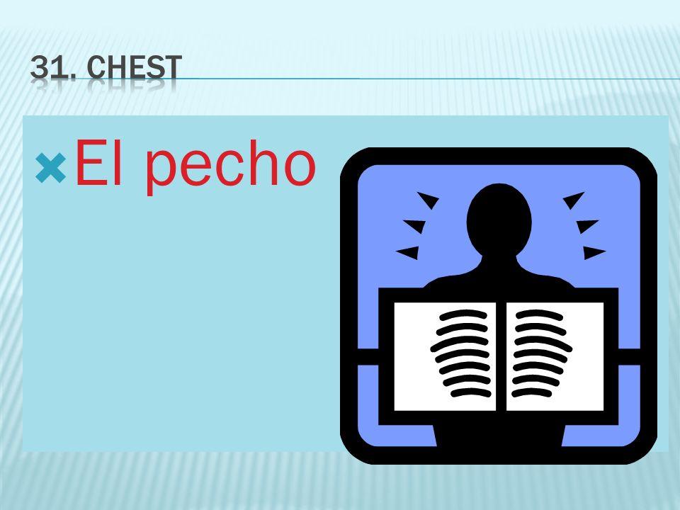 31. chest El pecho