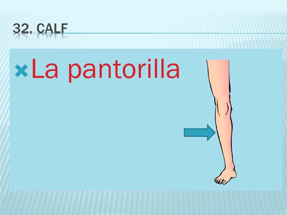 32. calf La pantorilla