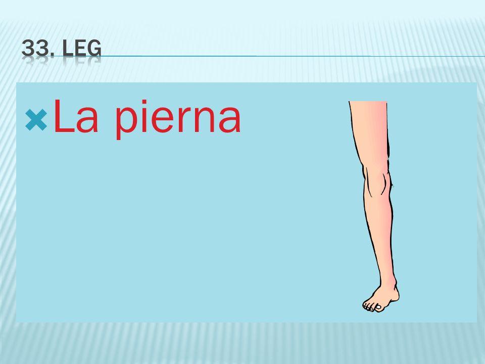 33. Leg La pierna
