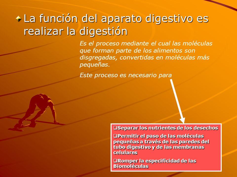La función del aparato digestivo es realizar la digestión