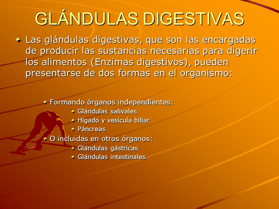 GLÁNDULAS DIGESTIVAS