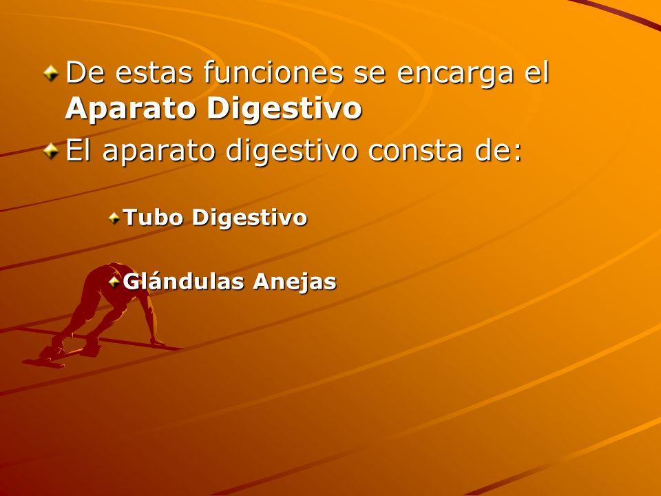 De estas funciones se encarga el Aparato Digestivo
