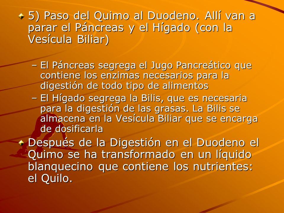 5) Paso del Quimo al Duodeno