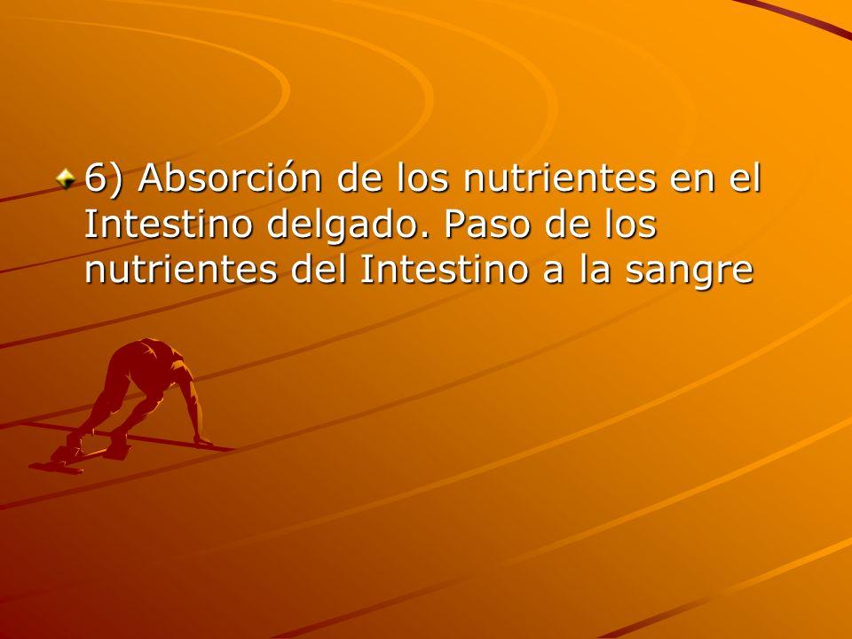 6) Absorción de los nutrientes en el Intestino delgado