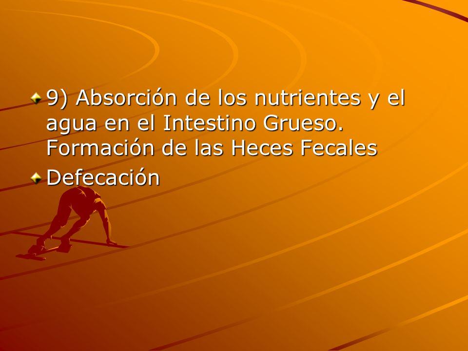 9) Absorción de los nutrientes y el agua en el Intestino Grueso