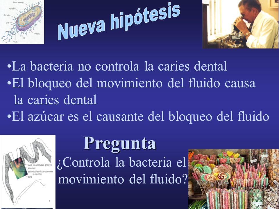 ¿Controla la bacteria el