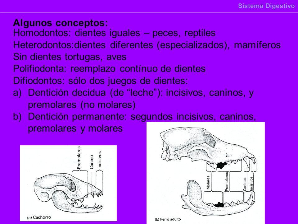 Homodontos: dientes iguales – peces, reptiles