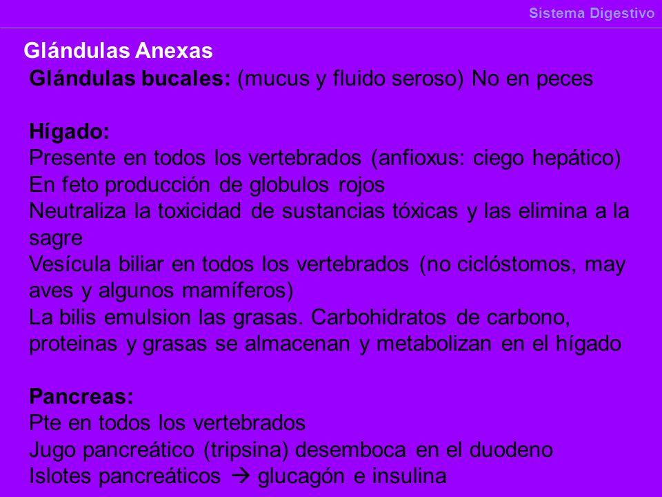 Glándulas bucales: (mucus y fluido seroso) No en peces Hígado: