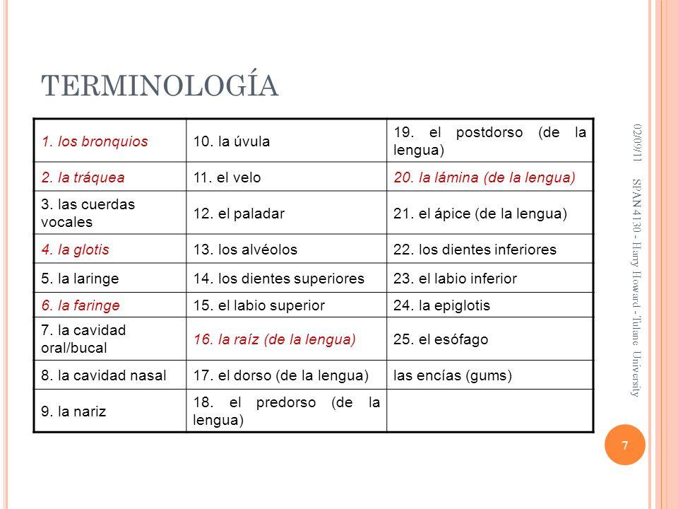TERMINOLOGÍA 1. los bronquios 10. la úvula
