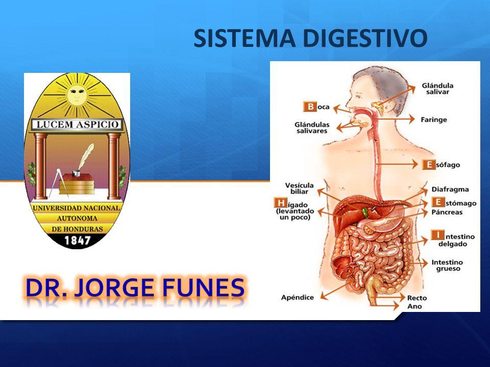 SISTEMA DIGESTIVO DR. JORGE FUNES