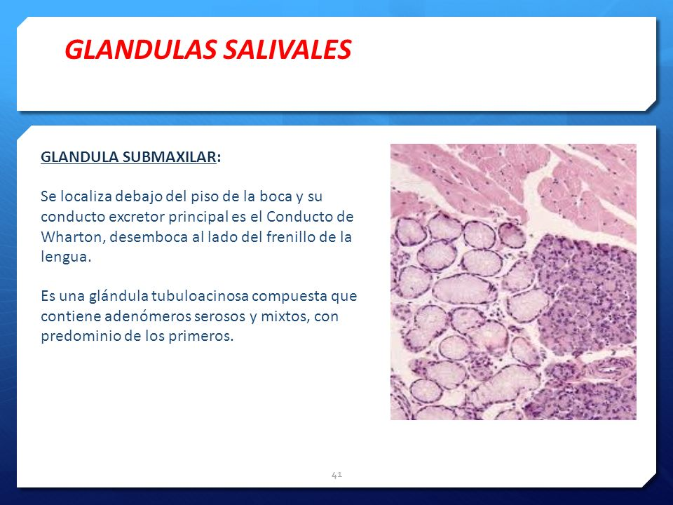 GLANDULAS SALIVALES GLANDULA SUBMAXILAR: