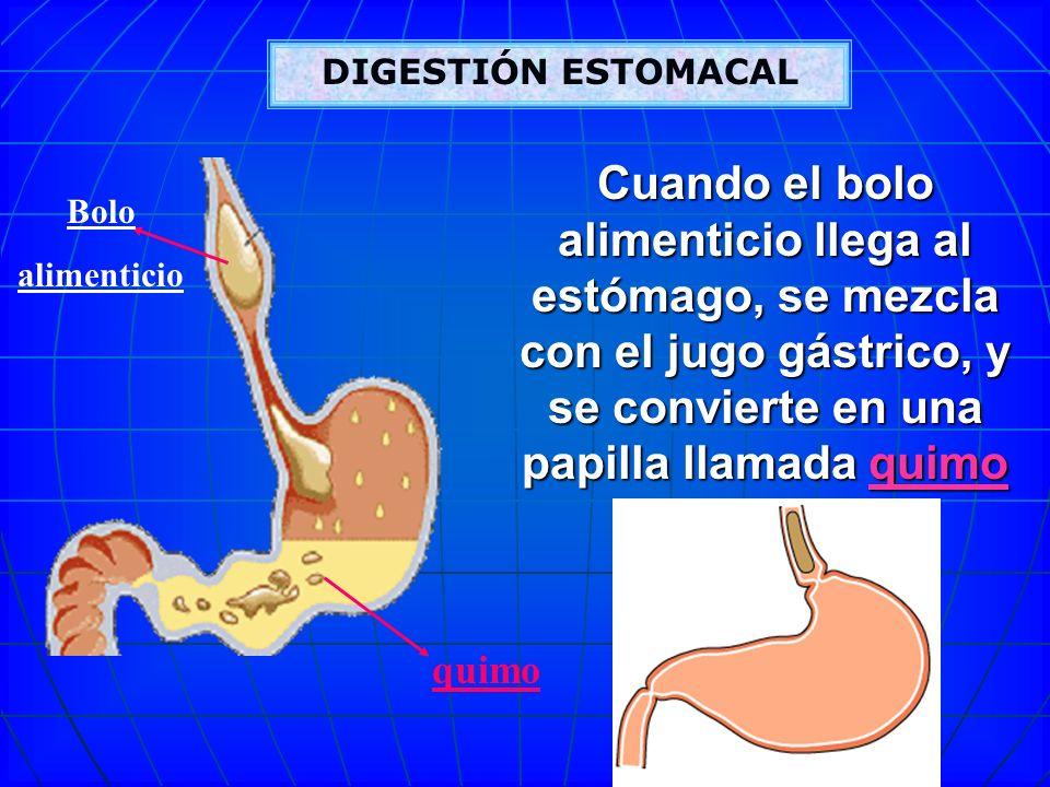 Bonito Quimo Estómago Viñeta - Anatomía de Las Imágenesdel Cuerpo ...