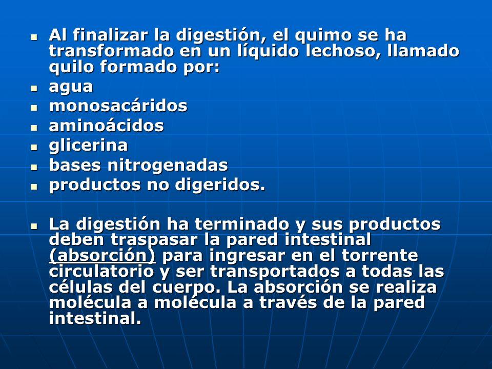 Al finalizar la digestión, el quimo se ha transformado en un líquido lechoso, llamado quilo formado por:
