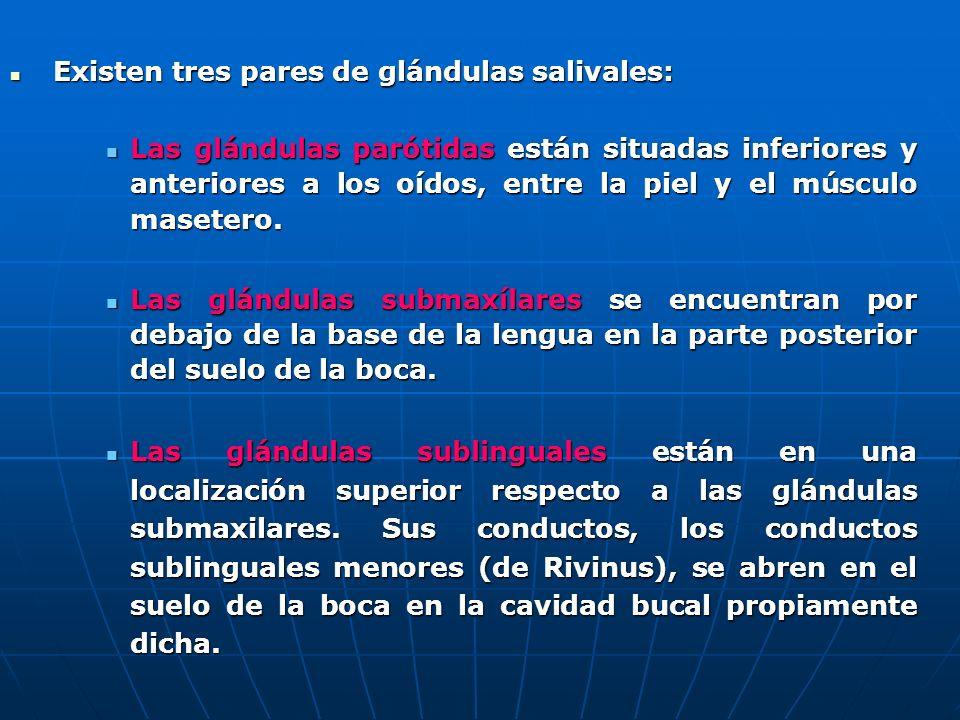 Existen tres pares de glándulas salivales: