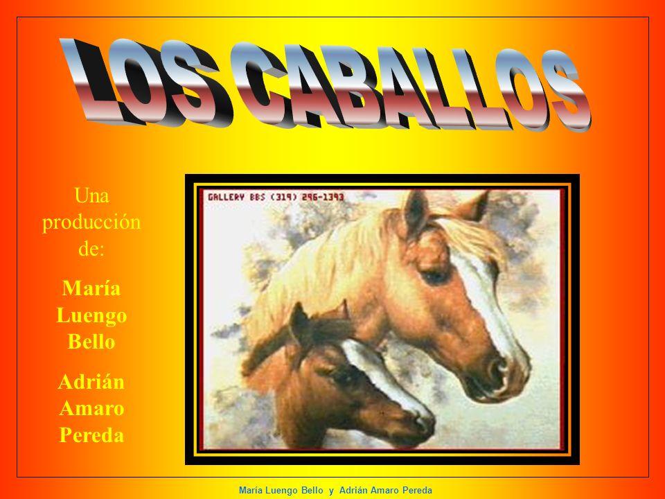 LOS CABALLOS Una producción de: María Luengo Bello Adrián Amaro Pereda