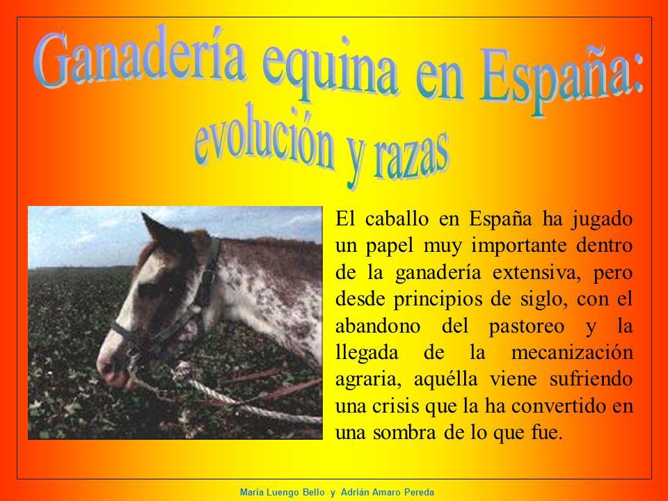 Ganadería equina en España: