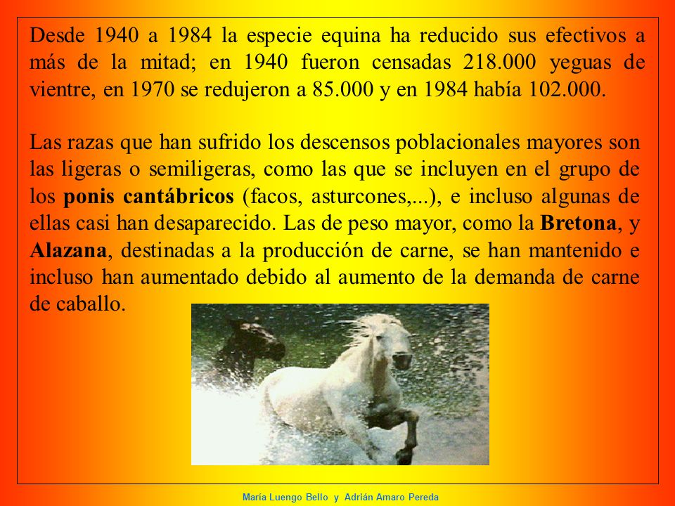 Desde 1940 a 1984 la especie equina ha reducido sus efectivos a más de la mitad; en 1940 fueron censadas 218.000 yeguas de vientre, en 1970 se redujeron a 85.000 y en 1984 había 102.000.