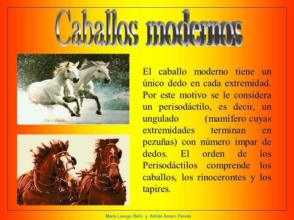 Caballos modernos