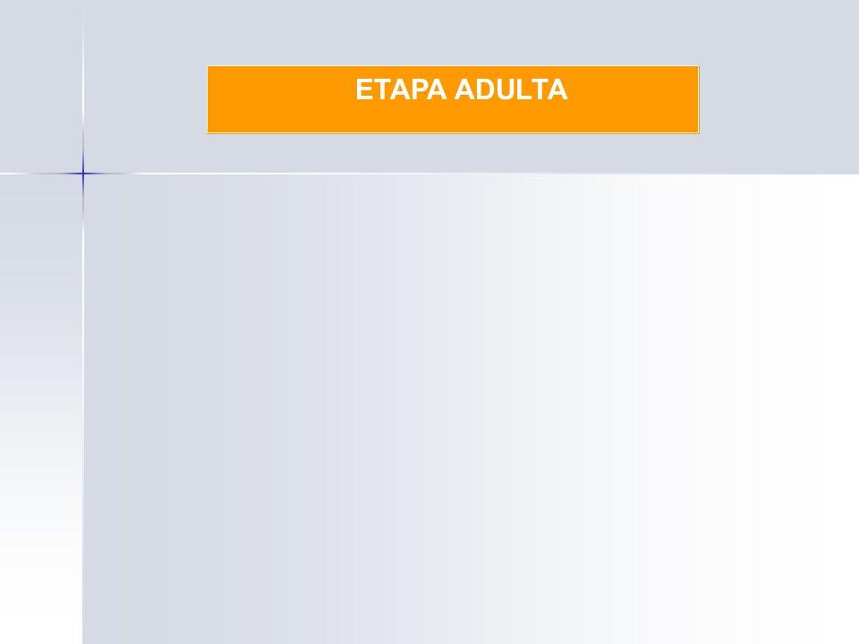 ETAPA ADULTA