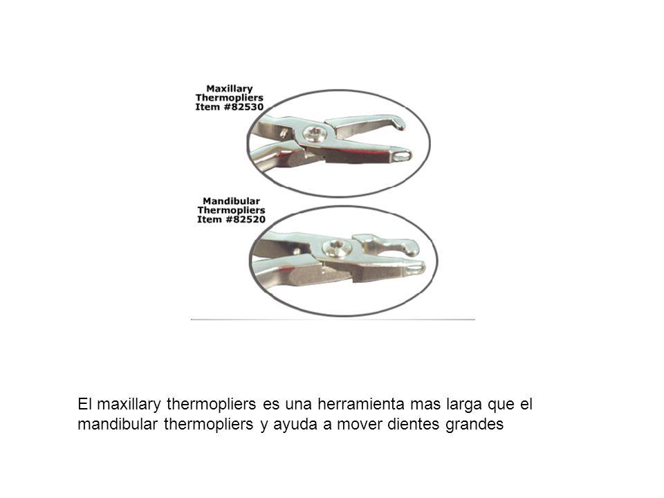 El maxillary thermopliers es una herramienta mas larga que el mandibular thermopliers y ayuda a mover dientes grandes