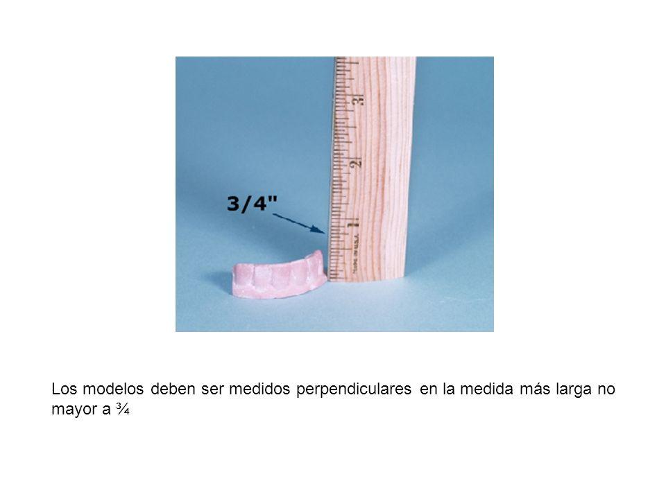 Los modelos deben ser medidos perpendiculares en la medida más larga no mayor a ¾