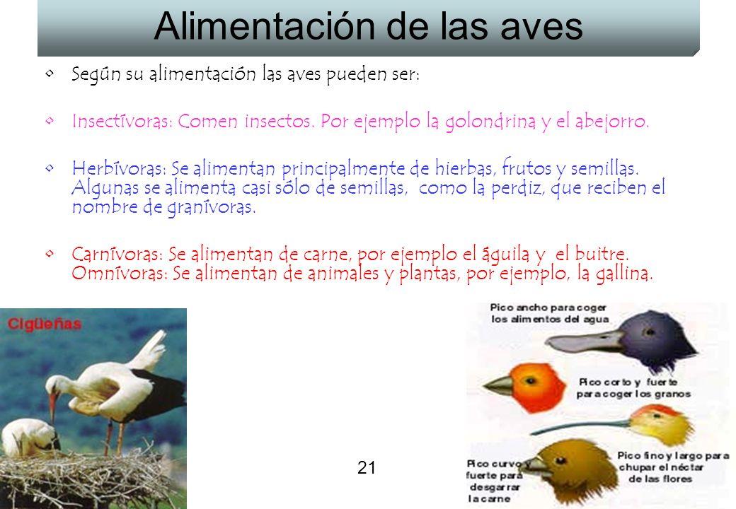 Alimentación de las aves