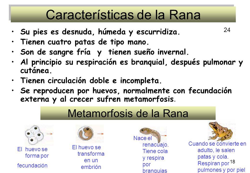Características de la Rana