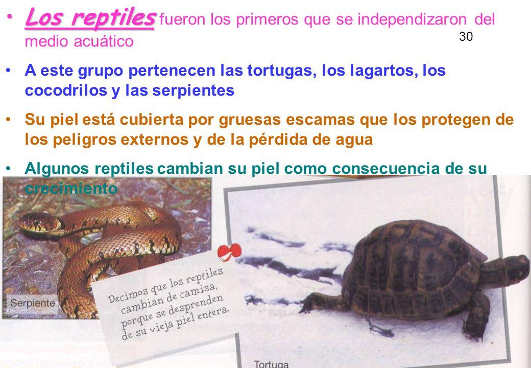 Los reptiles fueron los primeros que se independizaron del medio acuático