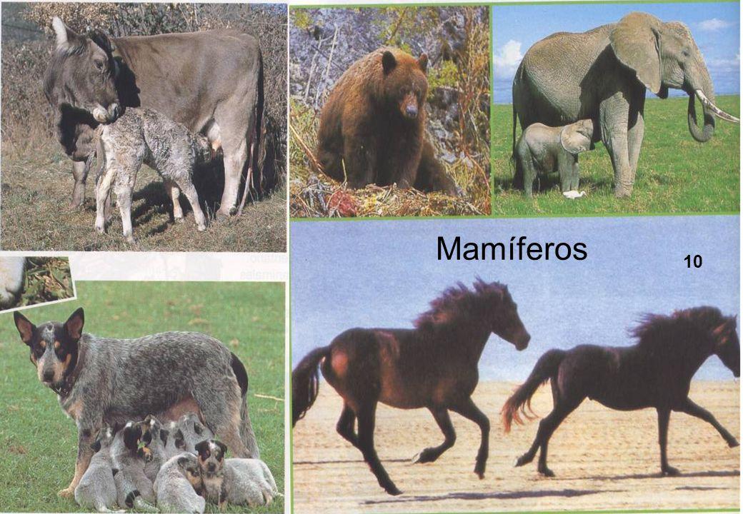 Mamíferos 10
