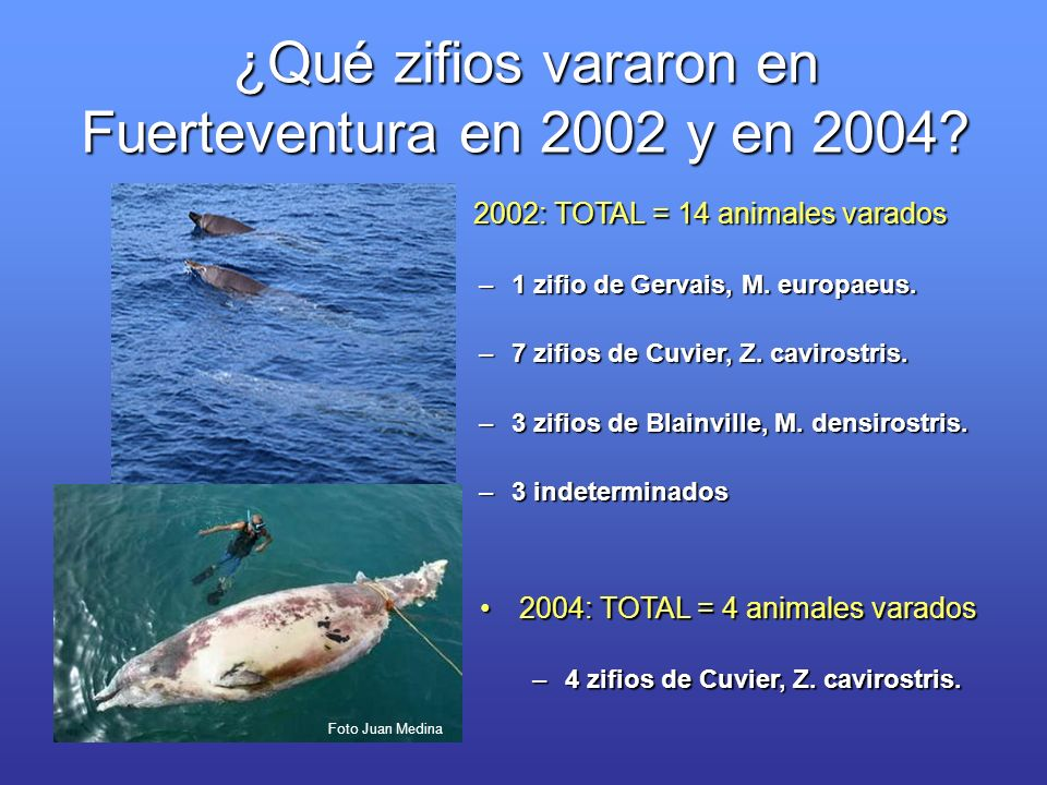 ¿Qué zifios vararon en Fuerteventura en 2002 y en 2004