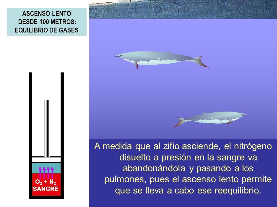 ASCENSO LENTO DESDE 100 METROS: EQUILIBRIO DE GASES.