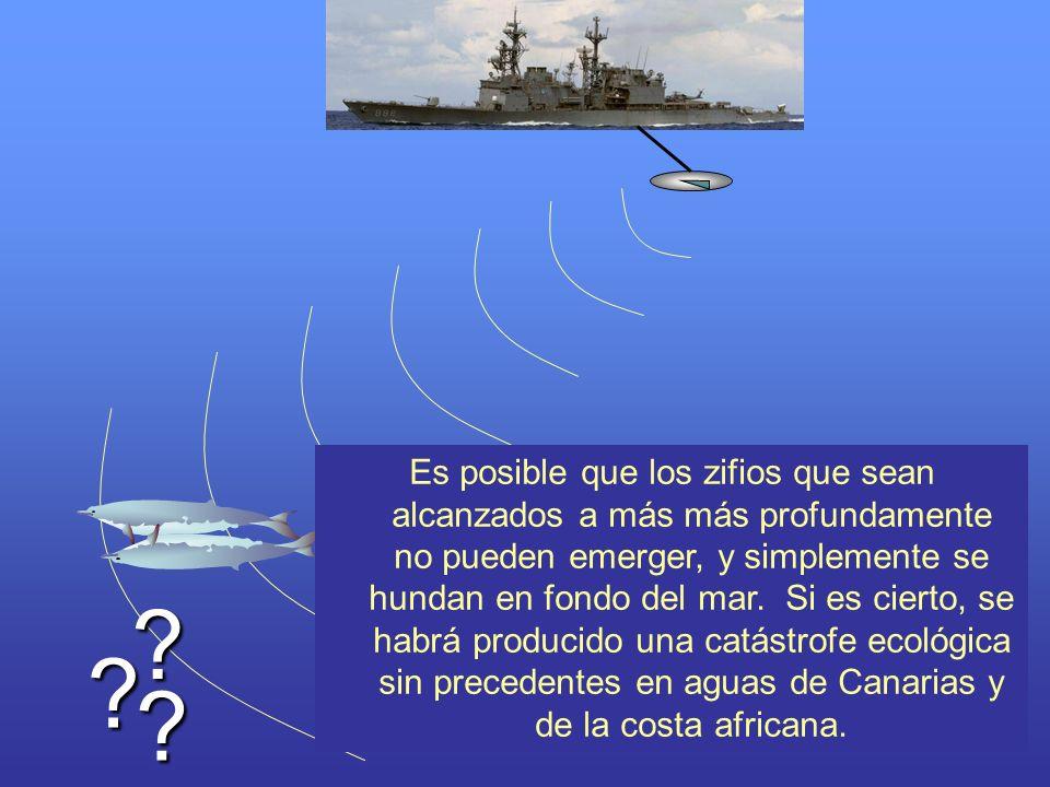 Es posible que los zifios que sean alcanzados a más más profundamente no pueden emerger, y simplemente se hundan en fondo del mar. Si es cierto, se habrá producido una catástrofe ecológica sin precedentes en aguas de Canarias y de la costa africana.