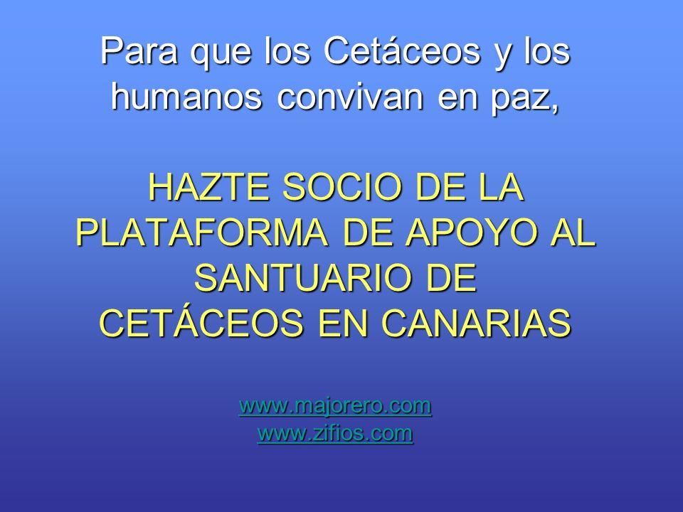 Para que los Cetáceos y los humanos convivan en paz, HAZTE SOCIO DE LA PLATAFORMA DE APOYO AL SANTUARIO DE CETÁCEOS EN CANARIAS www.majorero.com www.zifios.com