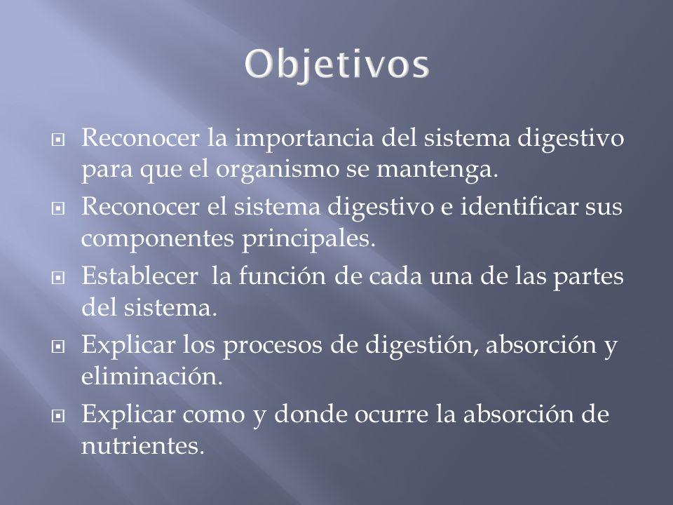 Objetivos Reconocer la importancia del sistema digestivo para que el organismo se mantenga.
