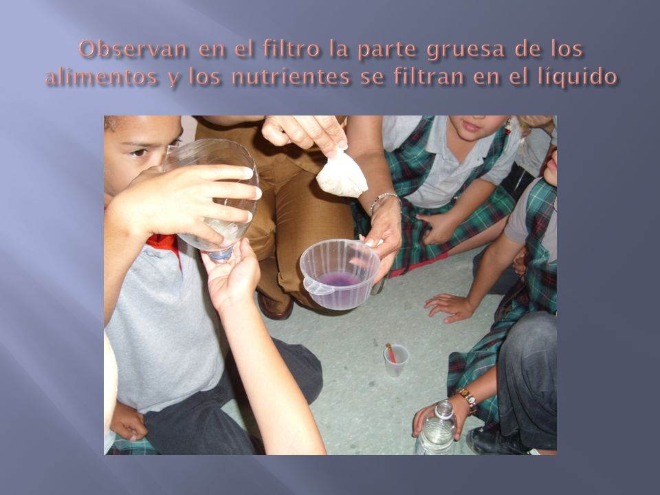 Observan en el filtro la parte gruesa de los alimentos y los nutrientes se filtran en el líquido